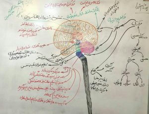 دانلود جزوه کنکوری دستگاه عصبی زیست شناسی